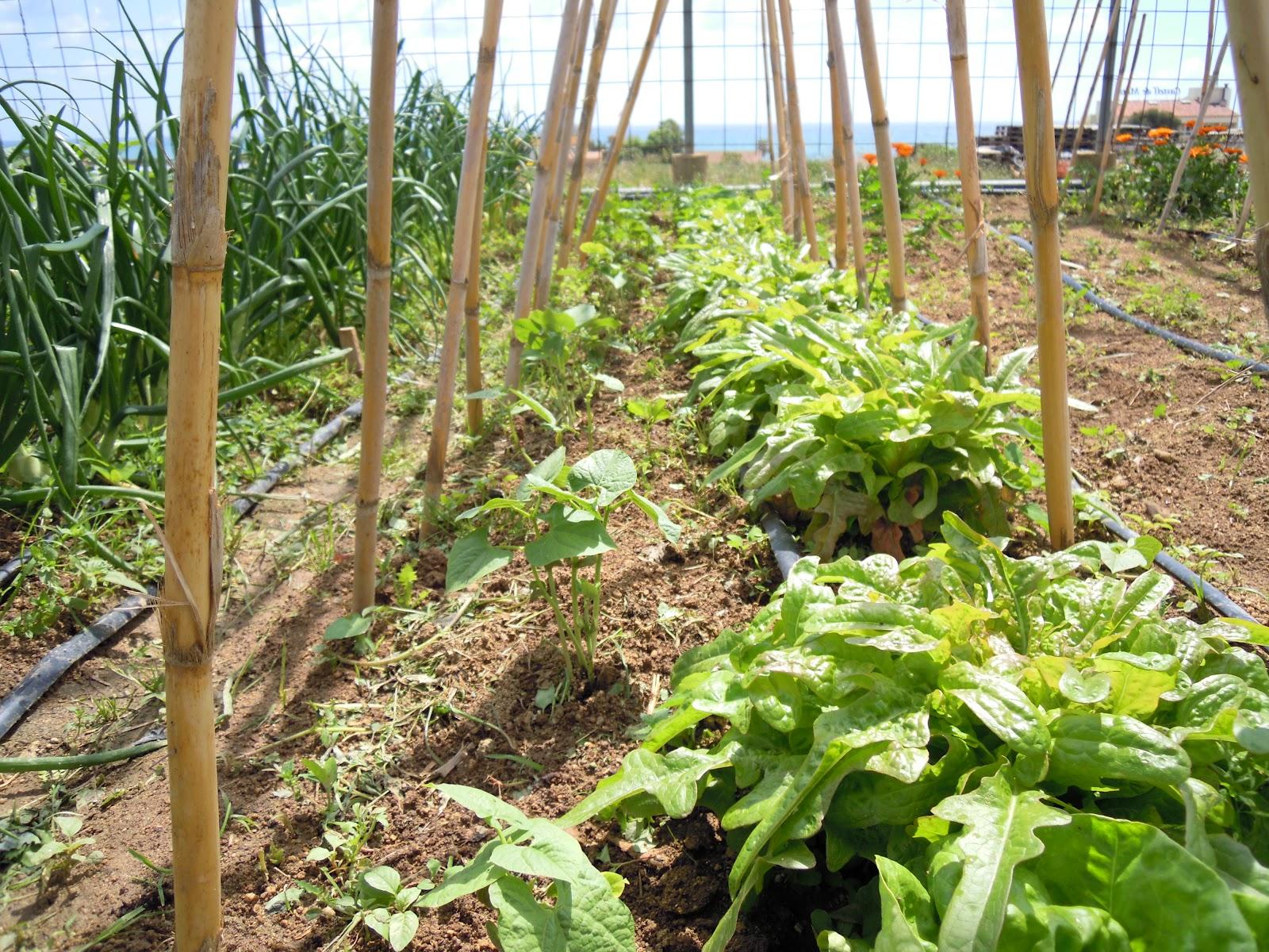 Huerto Ecol Gico En La Terraza O Balc N De Casa Tomateras