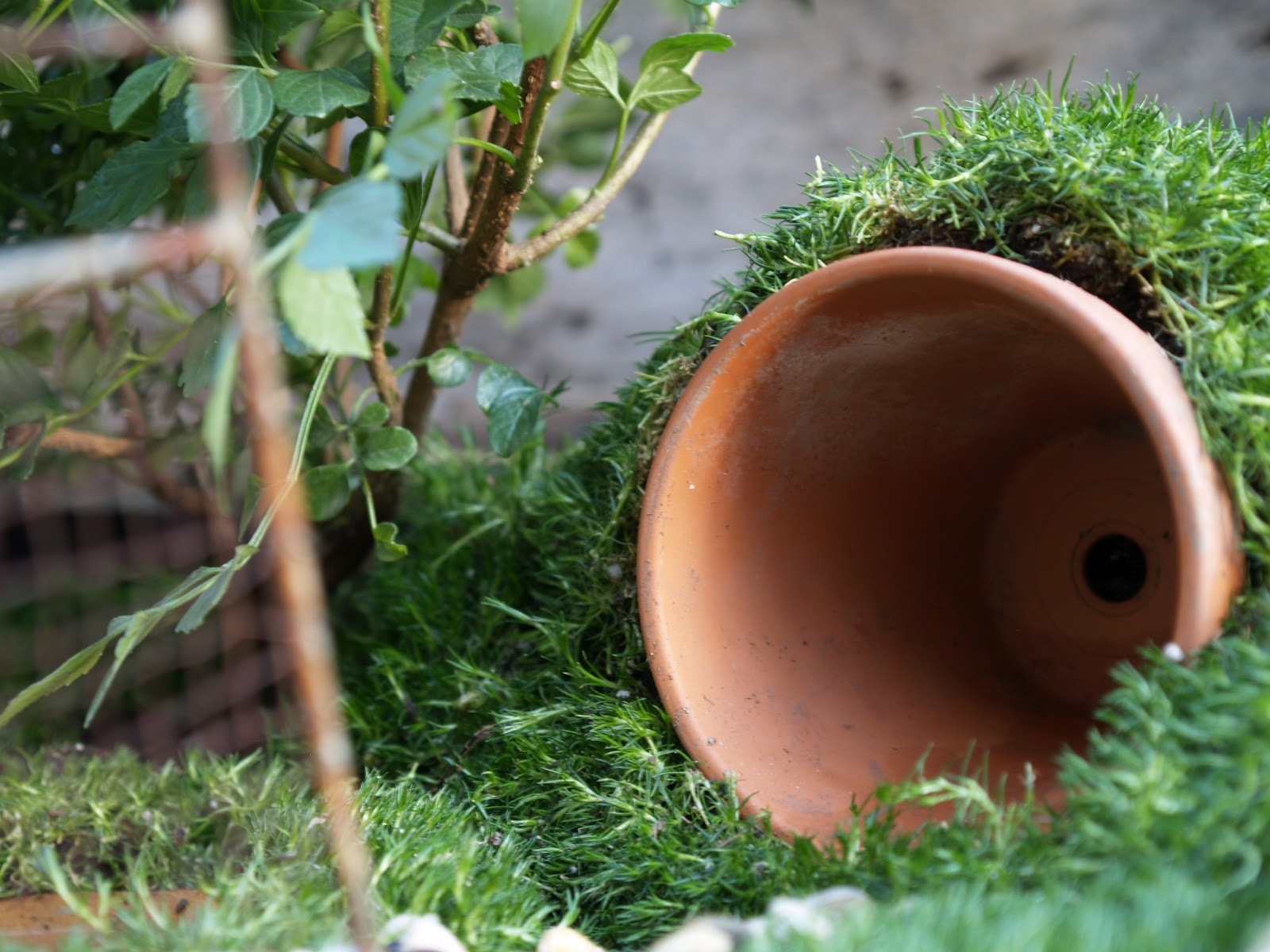 Planting Your Fairy Garden.