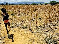 Plantação Perdida