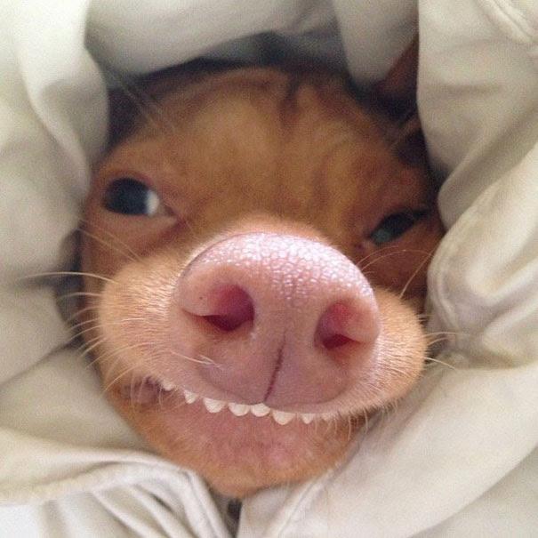 Tuna fue encontrada abandonada adorable sensación en Internet!