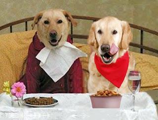 Il cibo migliore per il nostro amico cane