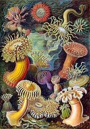 anemon memberikan perlindungan terhadap ikan badut