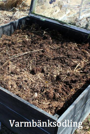 Om att odla i varmbänk