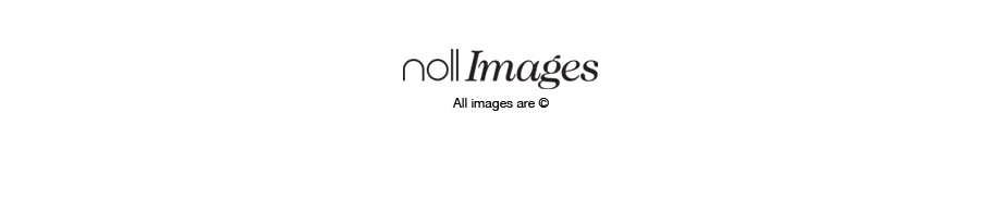 Noll Images