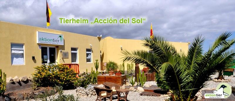 """aktion tier-Tierheim Teneriffa """"Acción del Sol"""""""