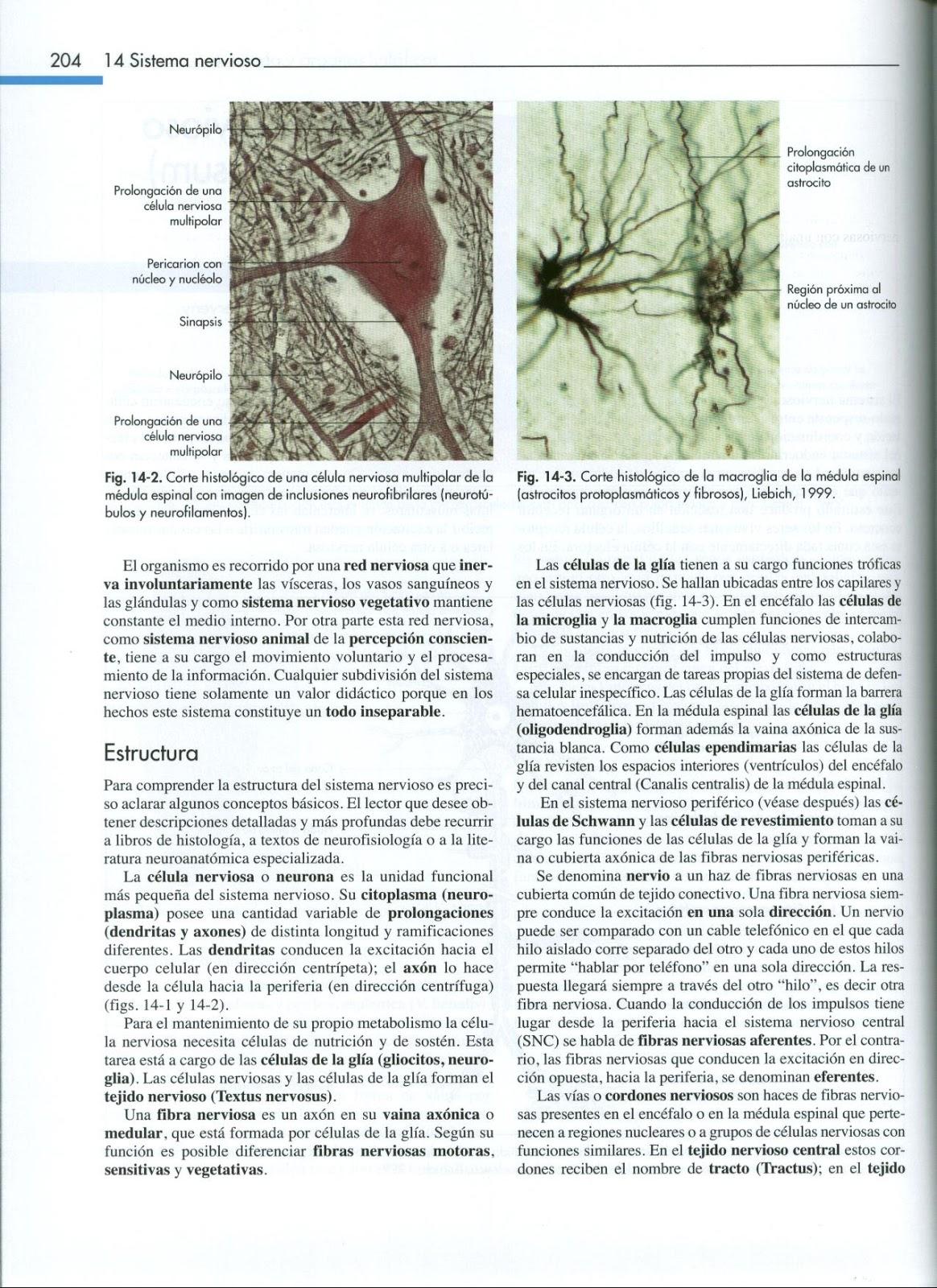 Anatomia Veterinaria: Sistema Nervioso Central Konig