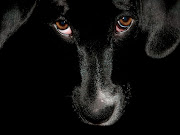 Black Dog Wallpapers