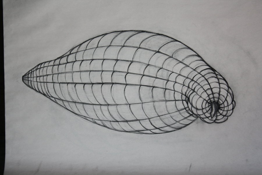 Cross Contour Line Drawing Fruit : Drawing cross contour