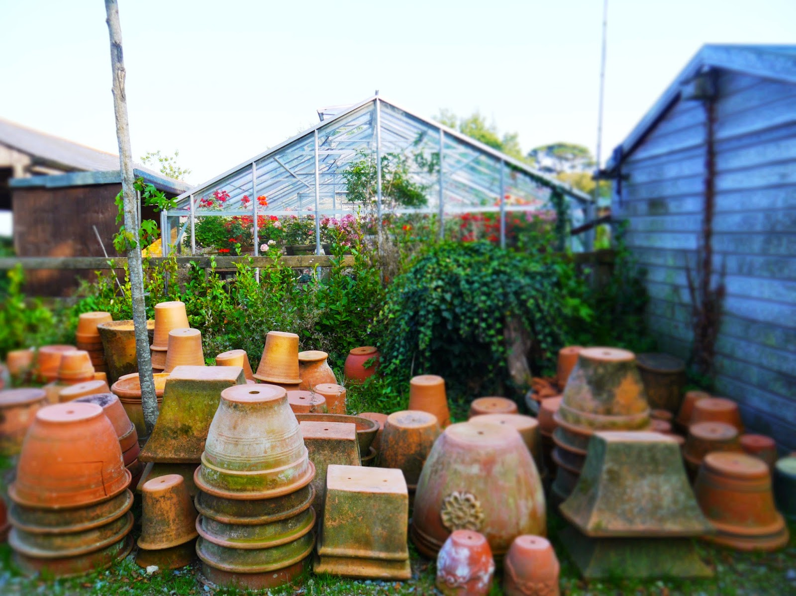 The Lost Gardens of Heligan, Cornwall - plant pots