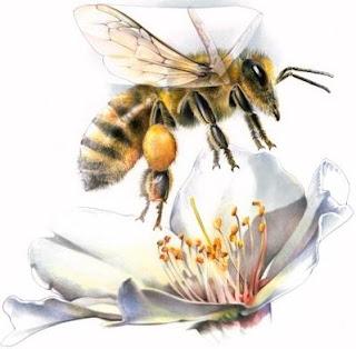 Imagen de la abeja volando sobre una flor