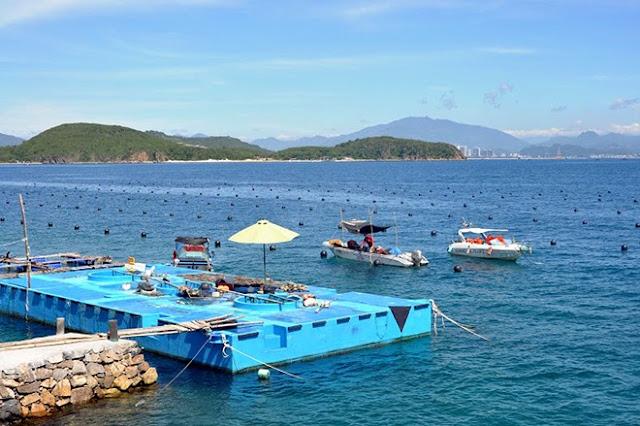 Xưởng nằm ở quận 7, TP.HCM nhưng ngọc trai lại được sản xuất tại một trang trại thủy sản ở Nha Trang, Khánh Hòa.