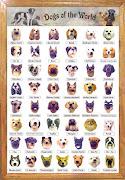 dog breeds dog breeds