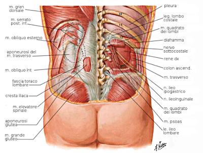Мышечные боли в ногах лечение народными средствами