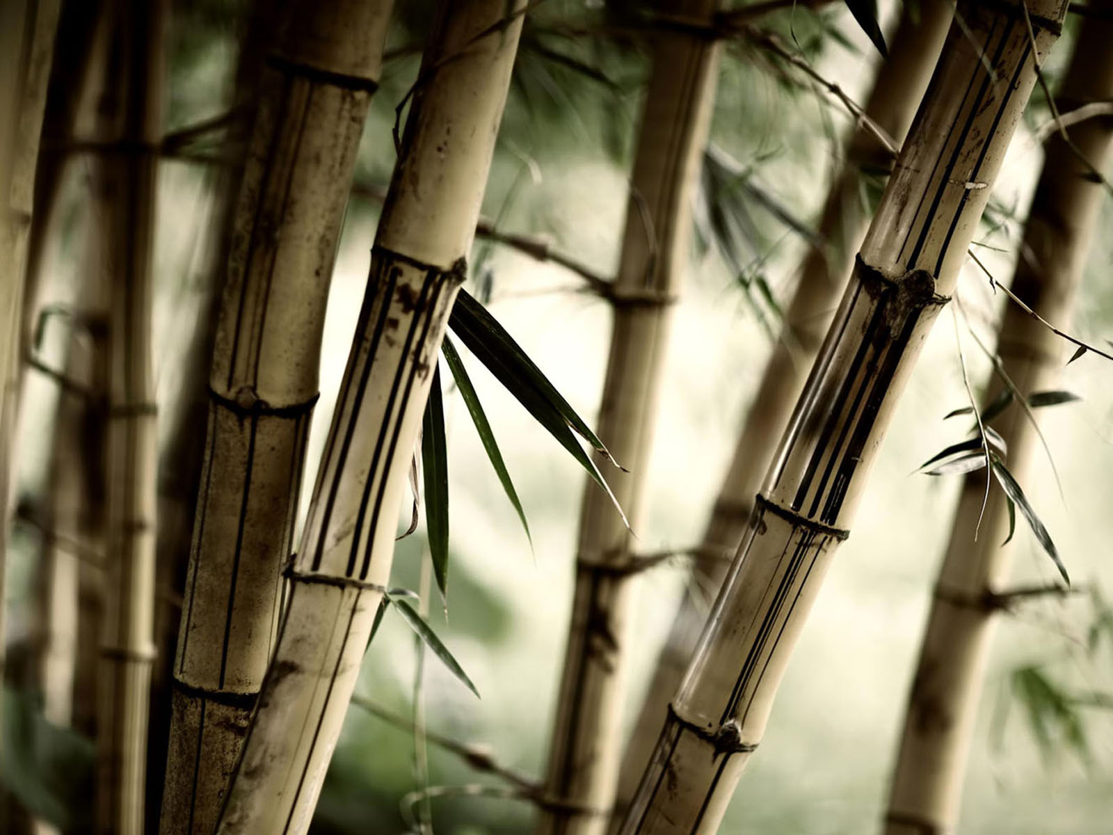 Wallpapers bamboo wallpapers for Bamboo wall mural wallpaper