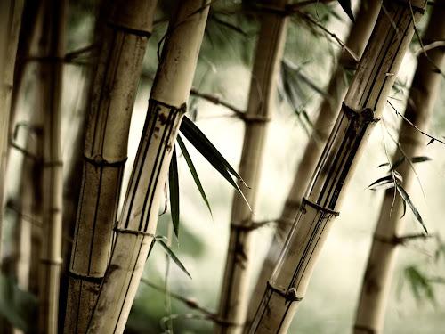 Gambar Hutan Bambu Keren