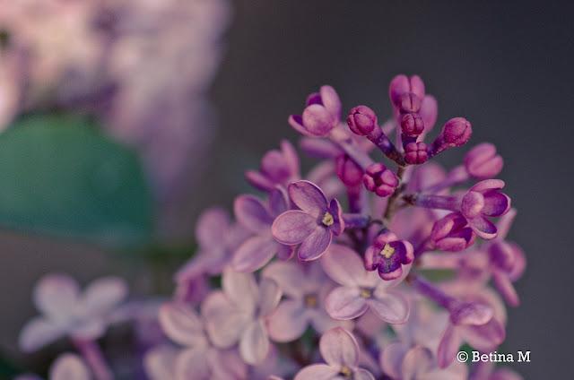 Derramando Flores ...
