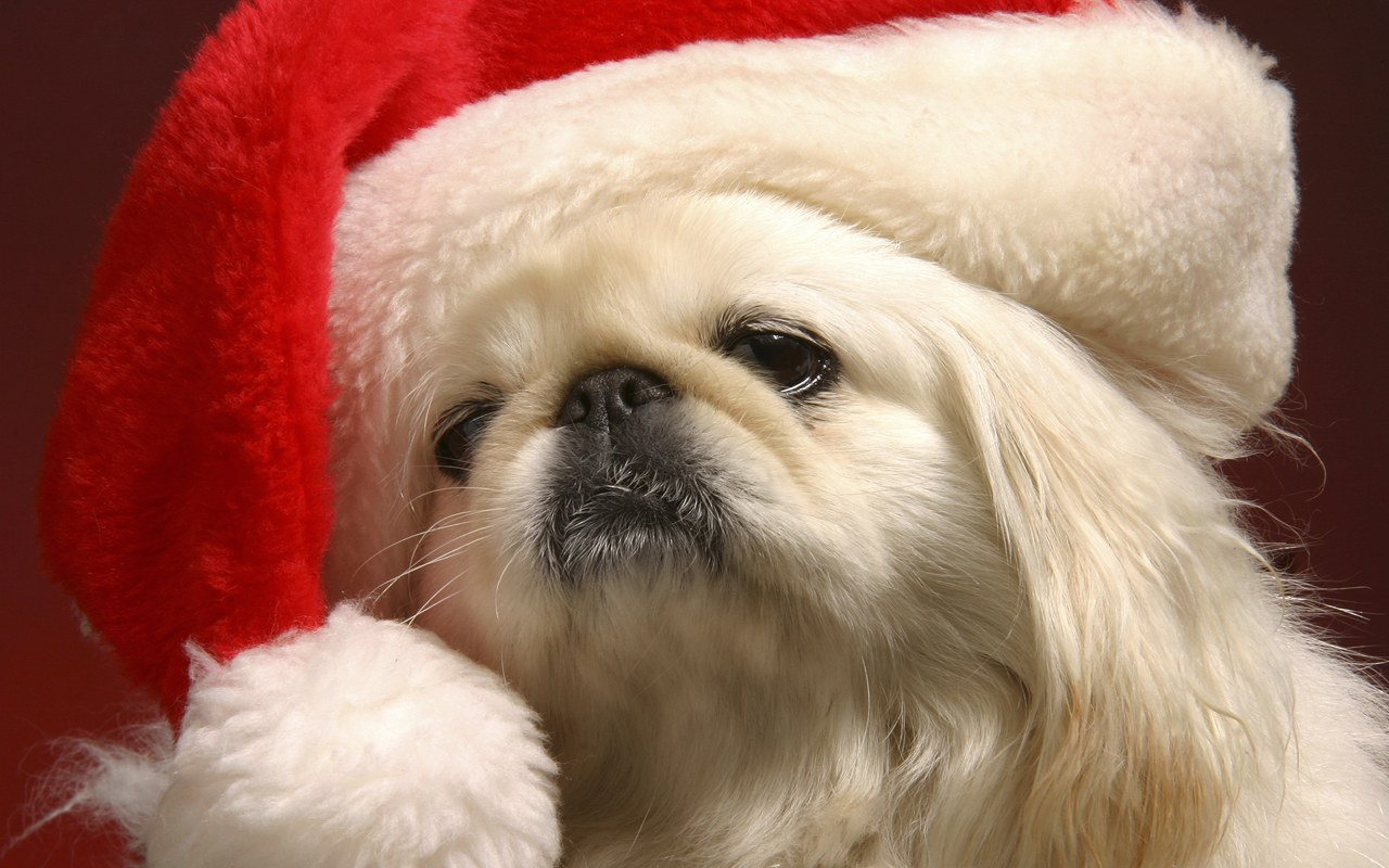 Funny Christmas Puppies Wallpaper Download