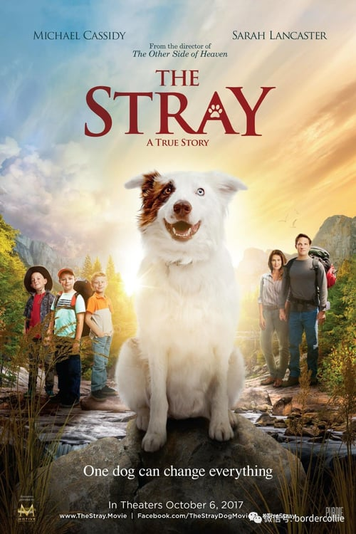 The Stray Legendado