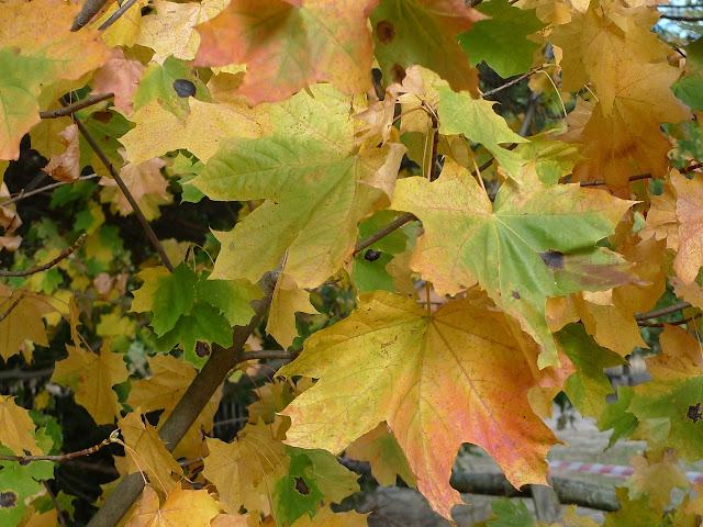 Jak przeżyć jesień i nie zwariować?How to survive througout autumn and not to go crazy?