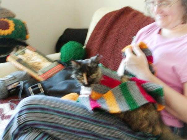 A long-haired tortoiseshell cat has a gray, green, yellow and burgundy scarf draped around her as she sits on a woman's lap.