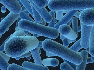 Resultado de imagen de Bacterias arqueas
