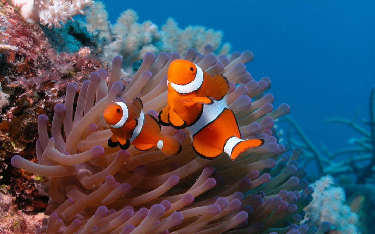 Wallpapers 4u 11 04 11 for All the fish