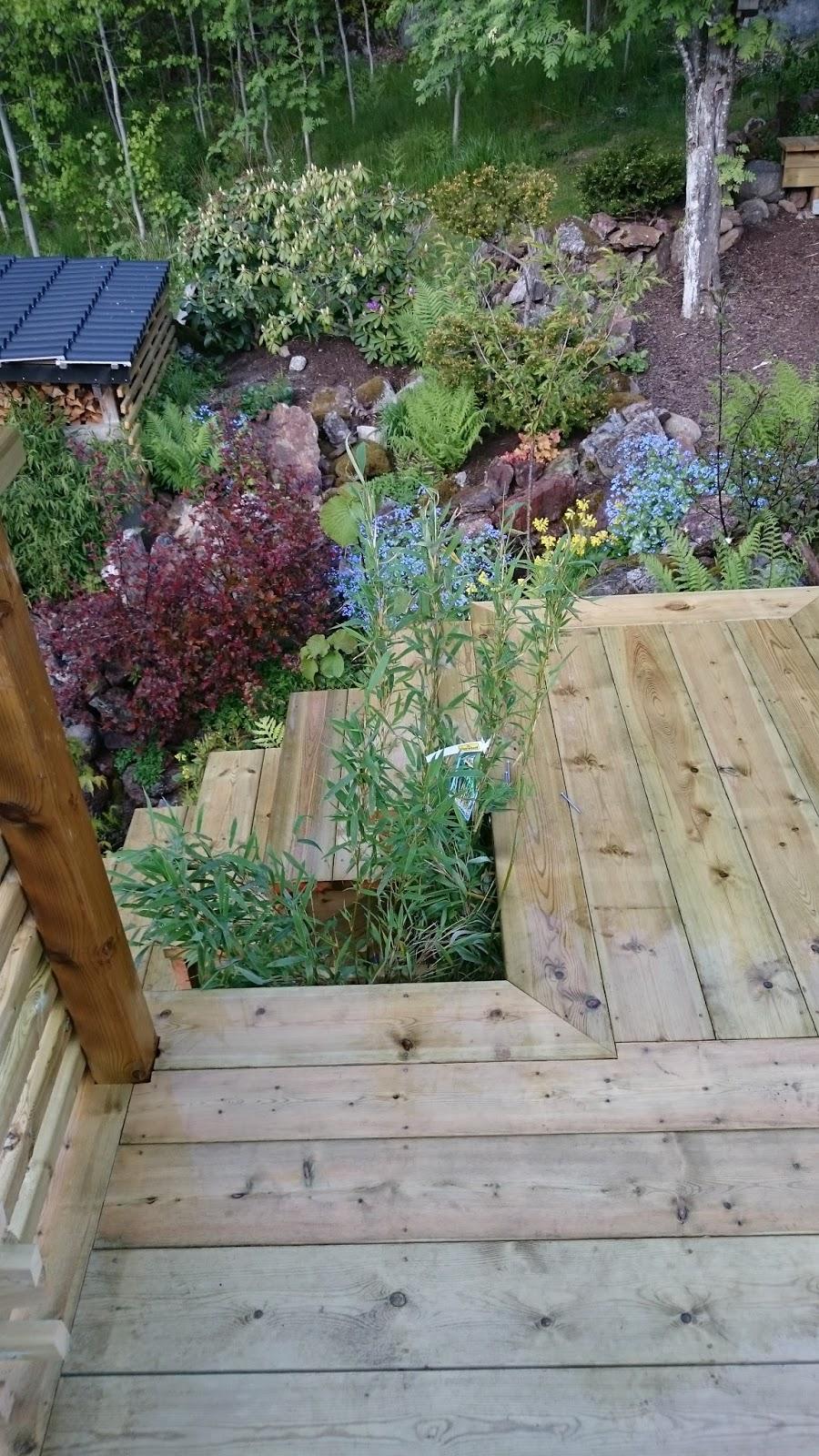 lindholm garden carmencitar nn en ny bambu och n gra k rror sten. Black Bedroom Furniture Sets. Home Design Ideas