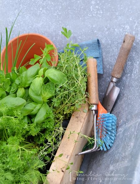 herbs, plant herbs, gardening