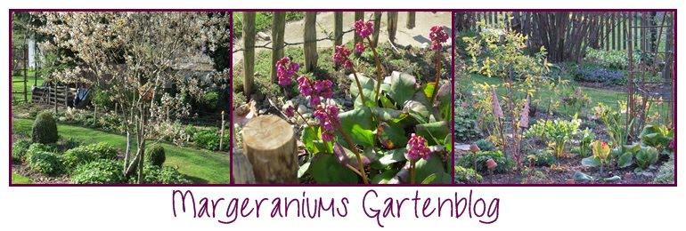 Margeraniums Gartenblog