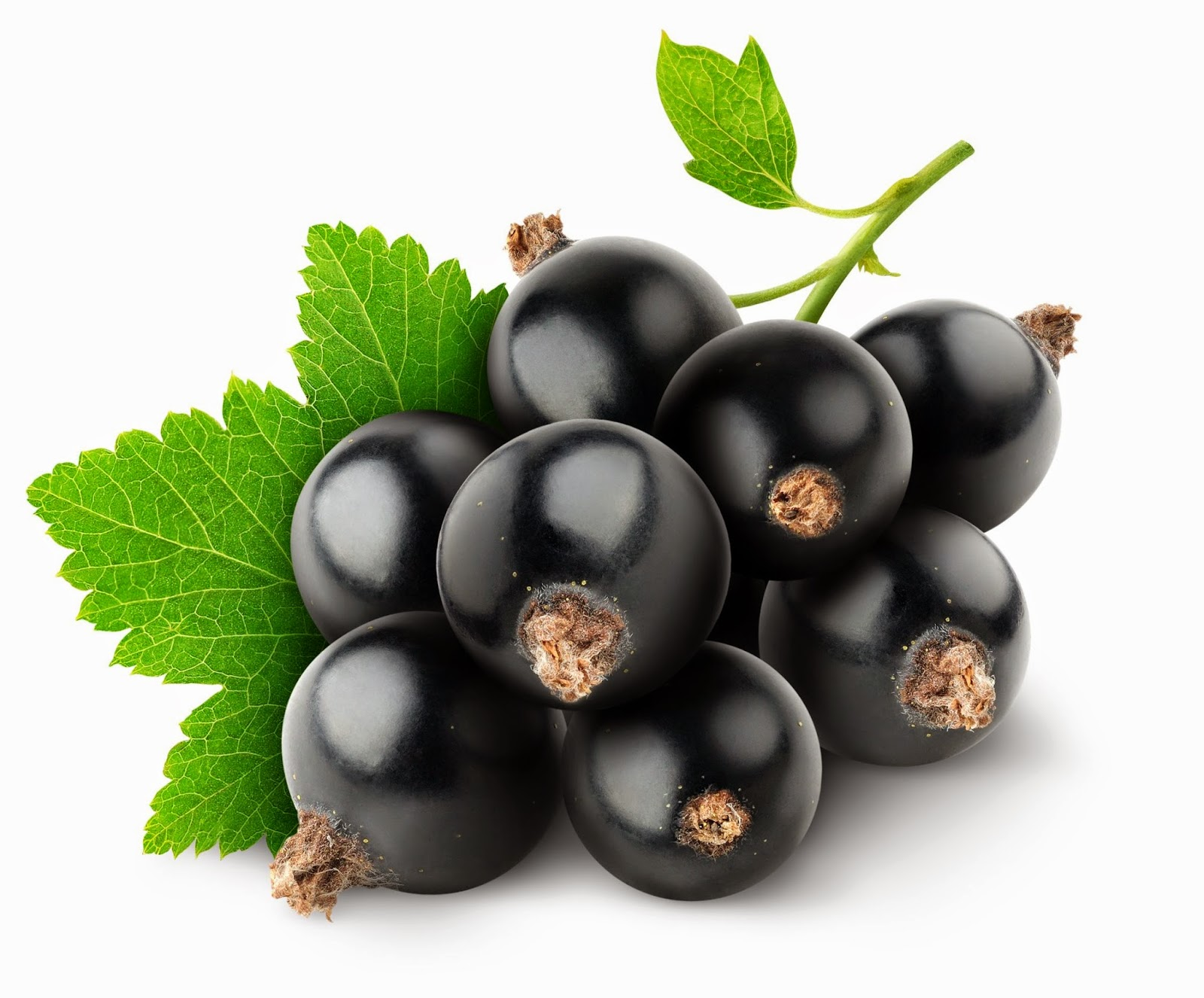 Benefits And Nutrition Of Black Currant For Health