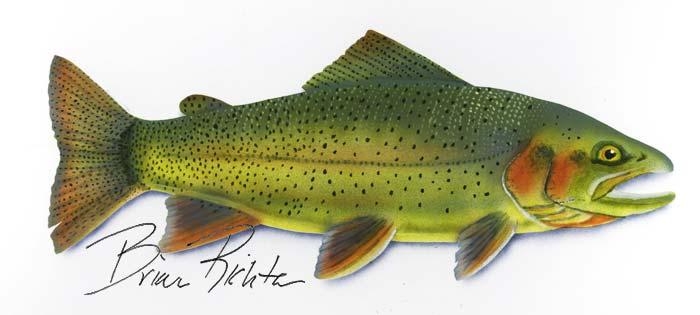 """Une des célèbres """"Cutthroat trout"""""""