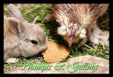 Champis & Gullina
