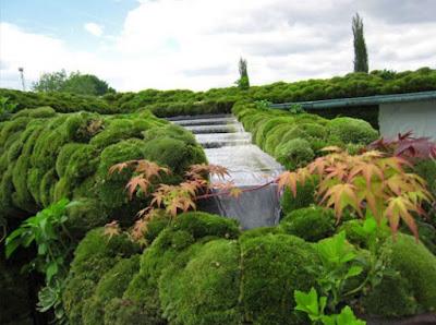 foto 4 asombroso jardin muzgo y cascada