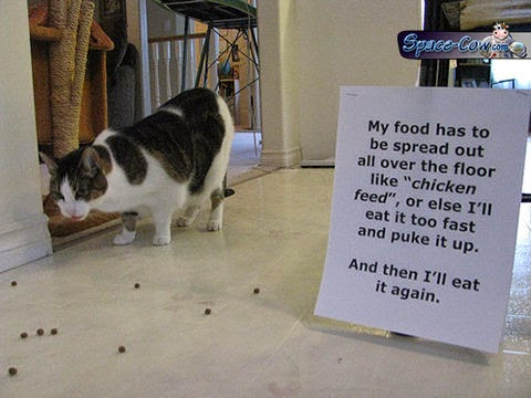 funny cat shaming picture
