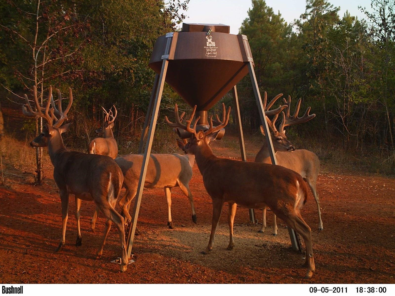 img cam trail feeder pictures buck boss deer galleries feeders