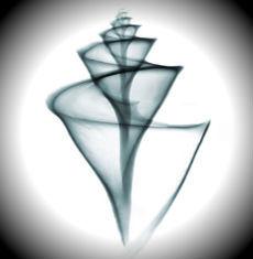 63eb79c43e0 Alba Lux  Diamante Negro - O maior do mundo