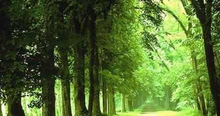 Le domaine forestier tunisien et ressources en bois for Meuble 5 etoile leur catalogue en tunisie