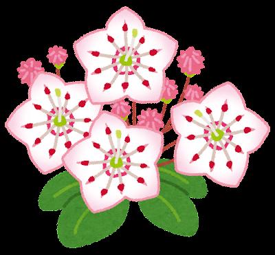 カルミアのイラスト(花)