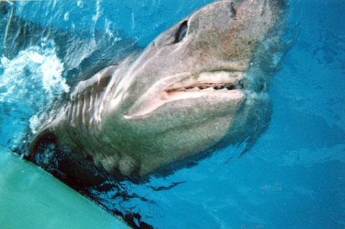 Hagfish Eating Whale 3...