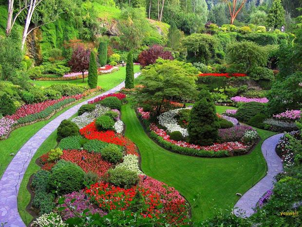 beautiful flowers design