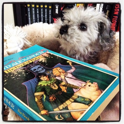 A fuzzy grey poodle, Murchie, lays in a small, fuzzy-sided dog bed. In front of him is a paperback copy of The Book of Three. Its cover features two white children--one dark-haired boy and one red-haired girl--fleeing through a forest in company with a pig. Behind them is a person wearing a horn-crowned skull over their face.