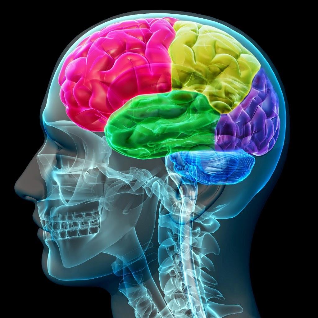 Brain12-1024x1024.jpg