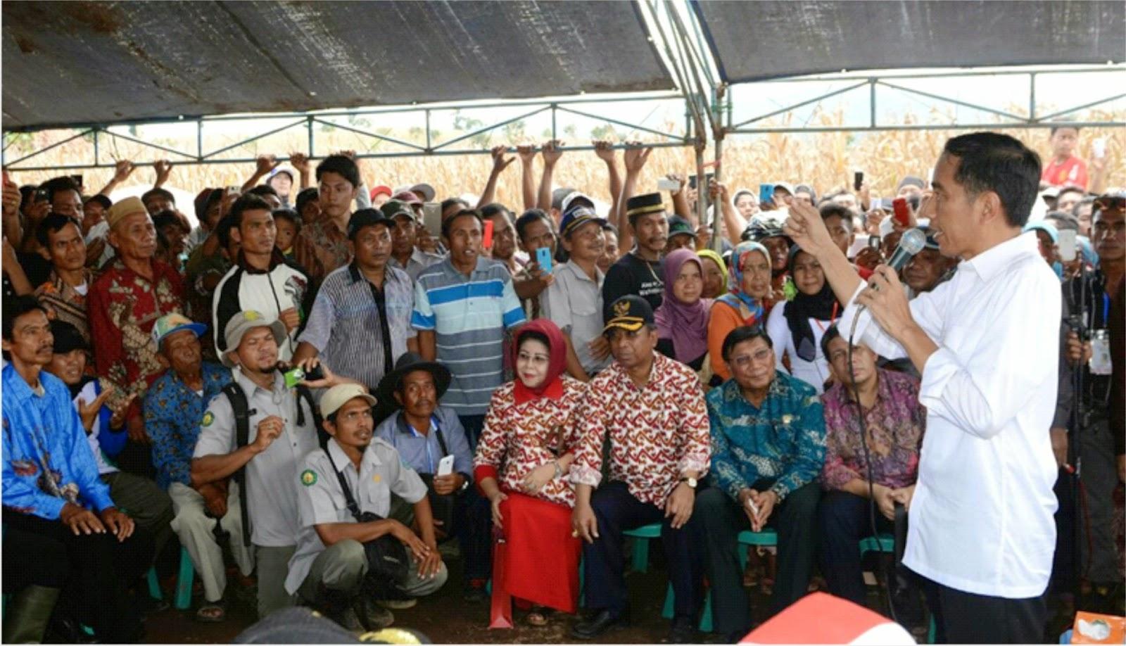 Jokowi Naikkan Harga Beli Jagung