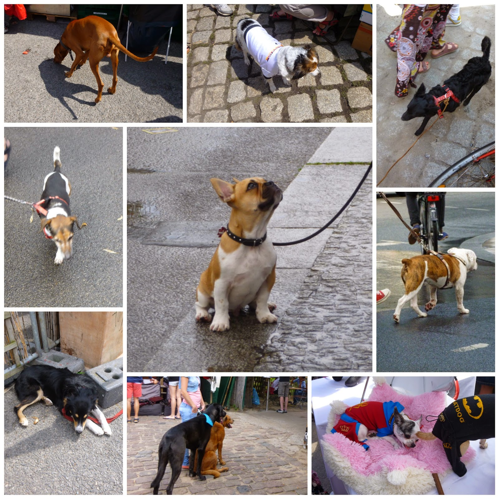 Cute dogs in Berlin city