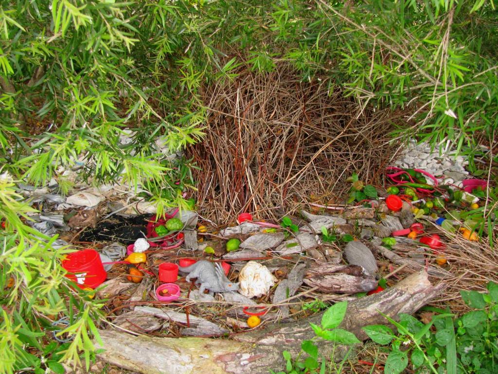 Les constructions de l 39 oiseau jardinier satin sweet for L oiseau jardinier