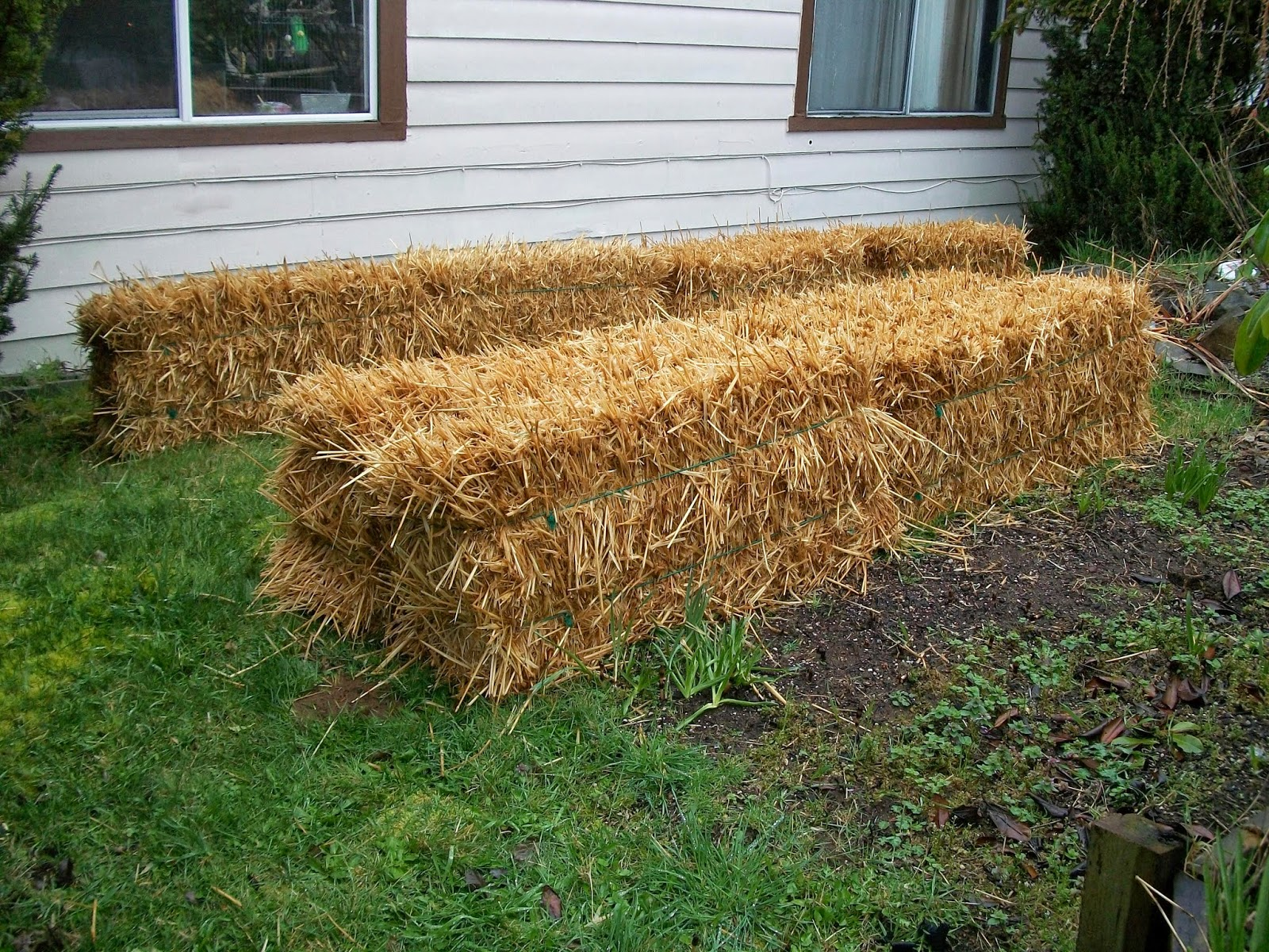 Jan 39 S Things Straw Bale Gardening Our Conditioning Schedule