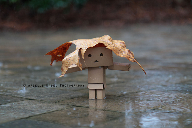 THIS Danbo is a wonderful discovery I had while in the grips of a ...: blogabingblogaboom.blogspot.com/2012/01/darling-danbo.html