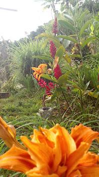 Salamina luz y flor