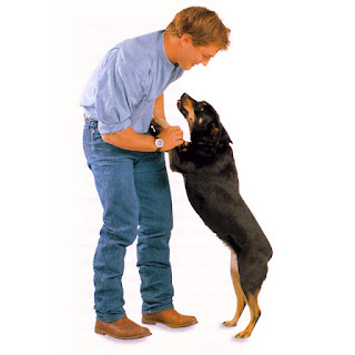 ¿Tu perro brinca al verte llegar?