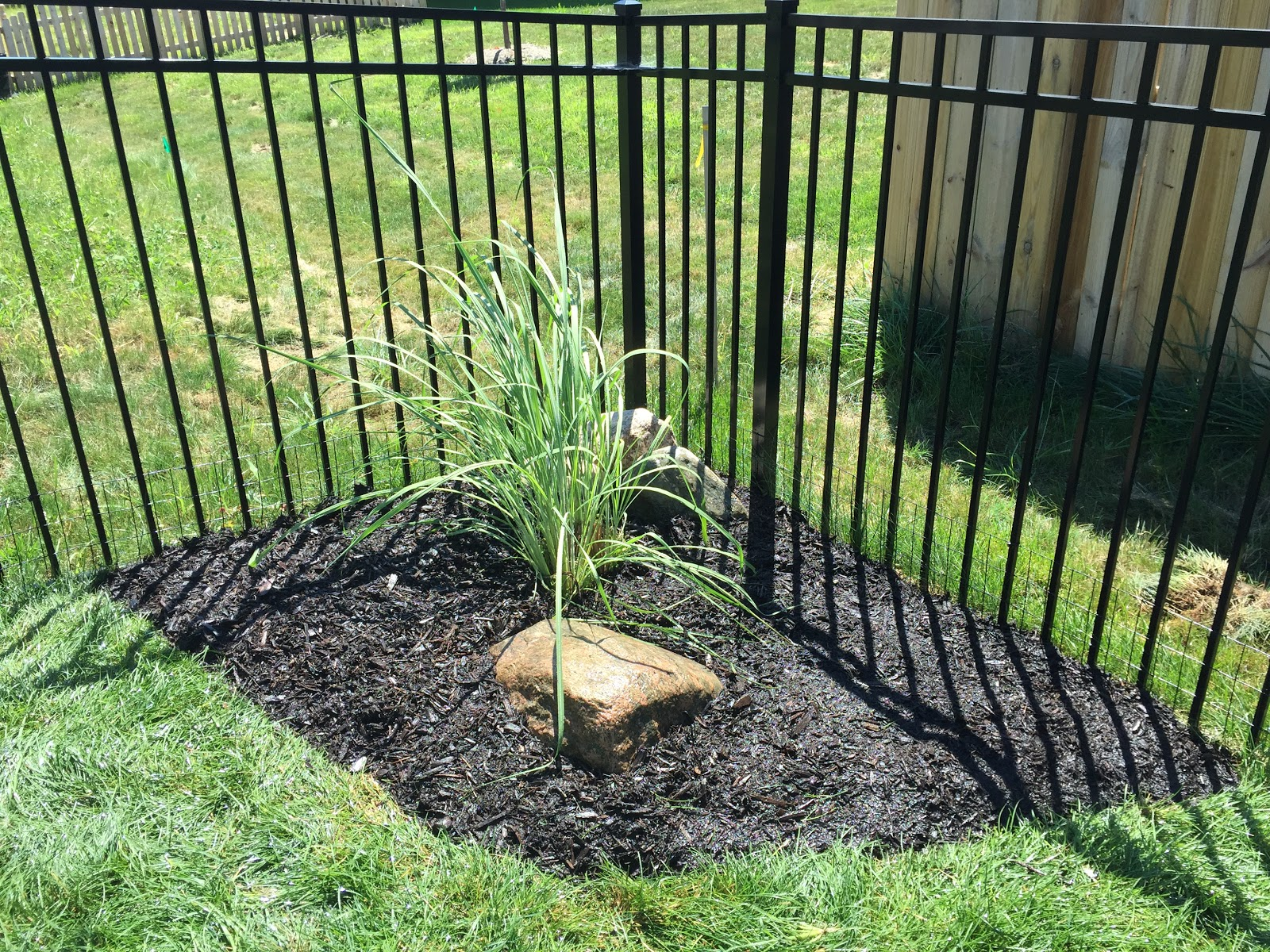 Backyard neophyte landscaping blog august 2015 for Landscaping ideas with pampas grass